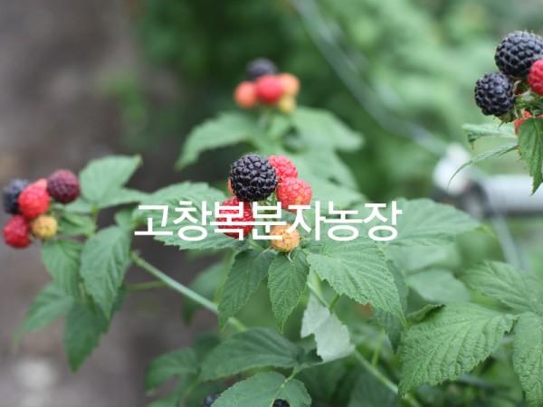 16886215_image1_37_0.jpg